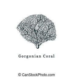 Gorgonian coral vector illustration.Drawing of sea polyp on...