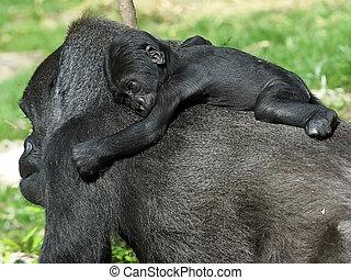 gorila, mãe, com, dela, bebê