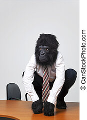 Gorilla businessman in shirt and tie sat on an office desk