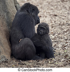 Gorilla Female and a Baby