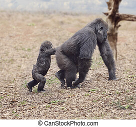 Gorilla Female with Her Baby