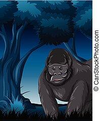 gorilla, foresta