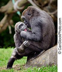 gorilla, giovane, gioco