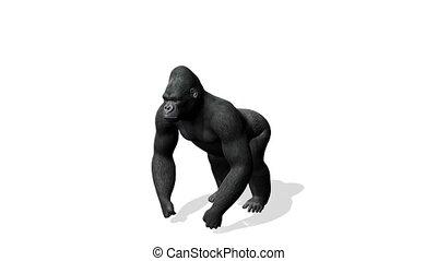 Gorilla - image of gorilla