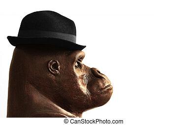 gorilla, in, cappello