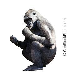gorilla., isolerat, vita