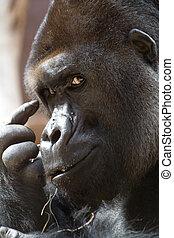 (gorilla), pensar