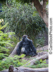gorilla in the middle of the Amazon jungle