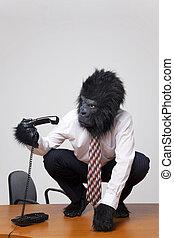 gorilla, su, uno, scrivania, ritiro, il, telefono.