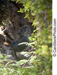 Gorilla surrounded by vegetation