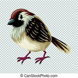 gorrión, pájaro, plano de fondo, transparente