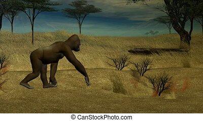 goryl, pieszy, przez, przedimek określony przed rzeczownikami, dżungla