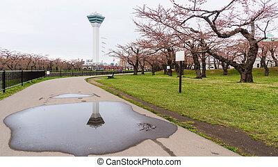 Goryokaku Tower and sakura blossom in park