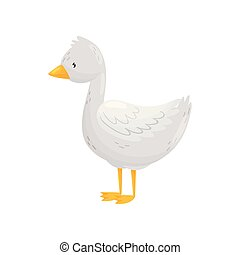 Gosling. Young, white with orange paws. Vector illustration....