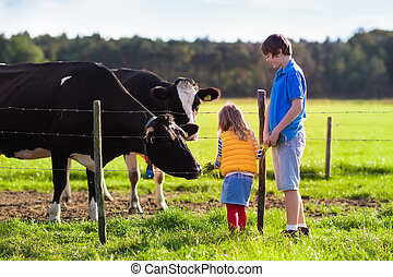 gosses, alimentation, vache, sur, a, ferme