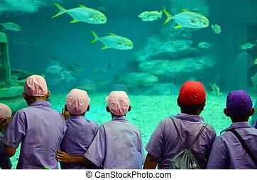 gosses, aquarium