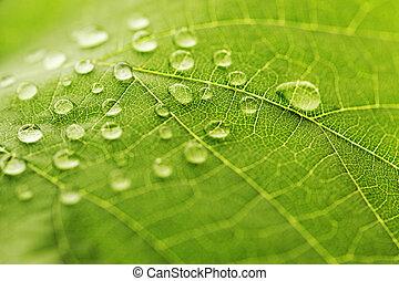 gota agua, en, hoja verde