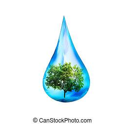 gota agua, y, árbol verde