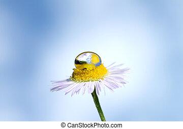 gota dágua, flor