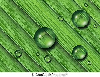 gotas del agua, hierba verde