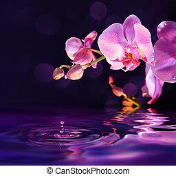 gotas, púrpura, agua, orquídeas
