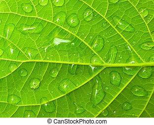 gotas, verde, leafs
