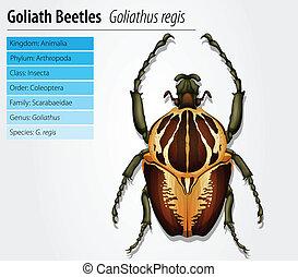 Gothiath beetle