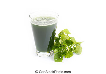 gotu kola juice in glass isolated on white background, asiatic pennywort, centella asiatica, ayurveda herbal drink