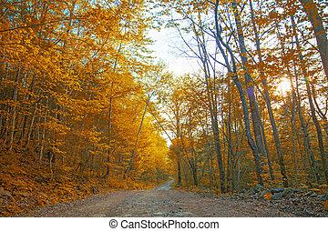 gouden, alles, road., geverfde, herfst, middelbare , bos,...