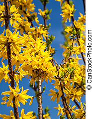 gouden, bloem, boompje