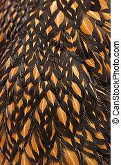 gouden, geregen, feathers., wyandotte, chicken