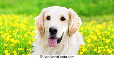 gouden, gras, zomer, op, zonnig, dog, gele, jonge, groene, verticaal, bloemen, dag, het liggen, retriever