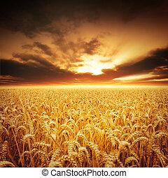 gouden, velden