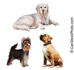 gouden, vrijstaand, yorkshire, puppy., bokser, het leggen, terrier., witte , retriever