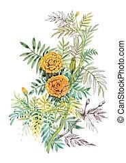 goudsbloemen, hand, watercolor, achtergrond, sinaasappel, getrokken, witte , schilderij
