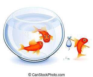 goudvis, emancipatie