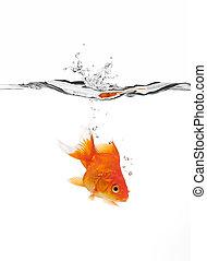 goudvis, springen, water