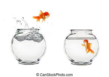 goudvis, springt