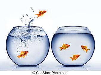 goudvis, springt, uit, van, de, water