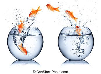 goudvis, -, vrijstaand, concept, veranderen