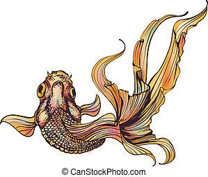 goudvis, witte achtergrond