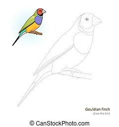 Gouldian finch bird learn to draw vector - Gouldian finch...