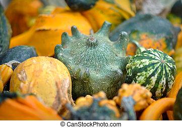 Gourd Day 2