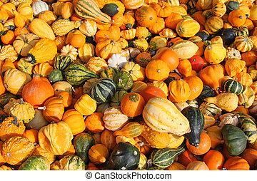 gourds, abóboras, e, abóboras