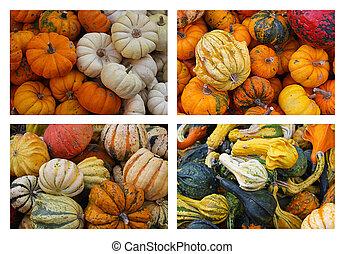 Gourds and Pumpkins - An Assortment Of Gourds and pumpkins ...
