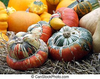 Gourds at Halloween