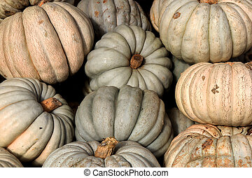 Gourds background. Many pumpkins texture. Squashes backdrop.