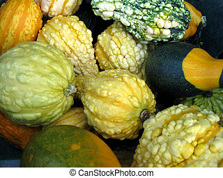Gourds Background - Small warty gourds for fall and...
