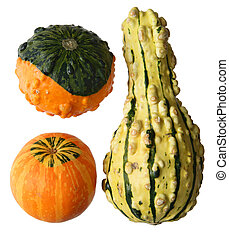 Fresh gourds pumpkin isolated on white background