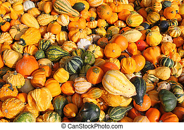 Gourds, squashes, and Pumpkins - Background photo of fresh...
